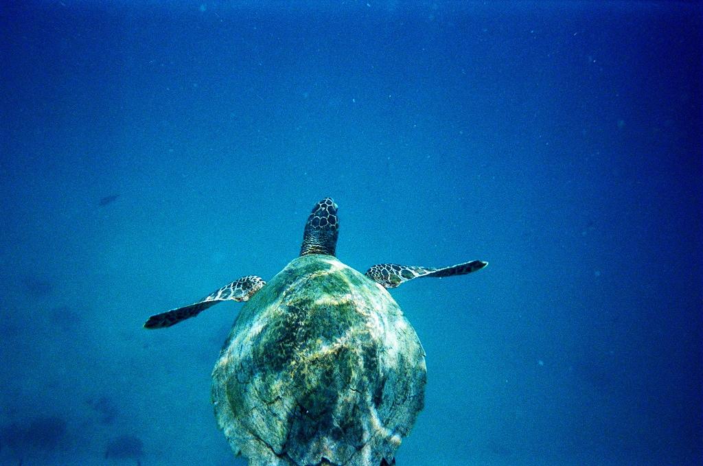 Chumbe Island Zanzibar Turtle