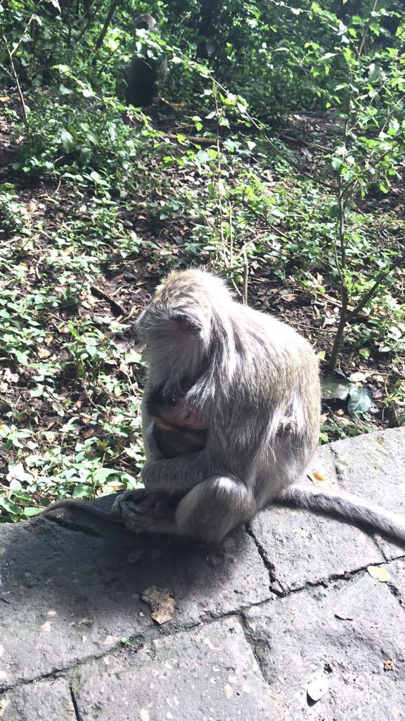 Ubud Monkey Top 5 places in Bali