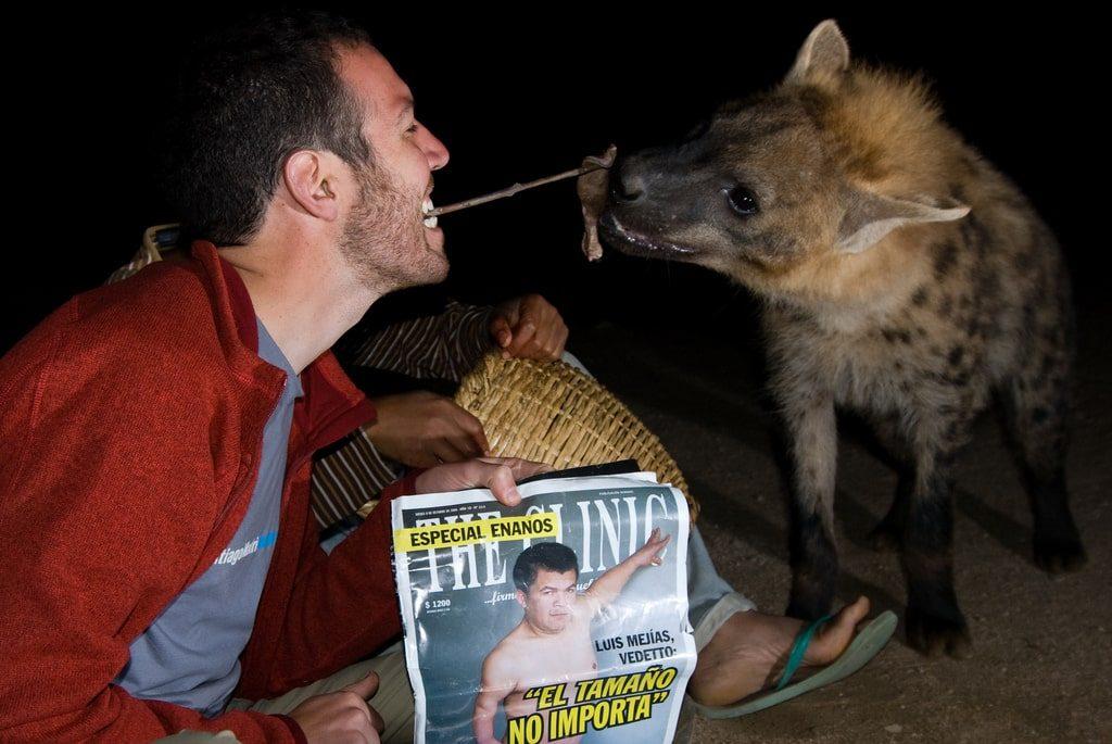 Feed Hyenas Harar Ethiopia