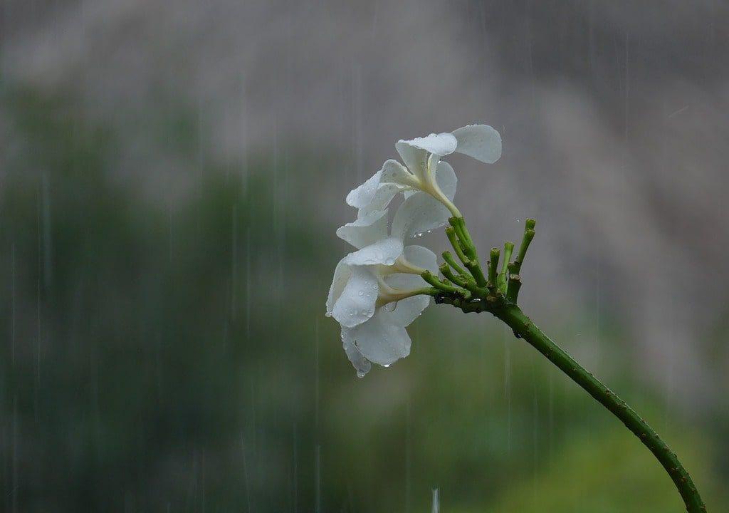 monsoon sick in india